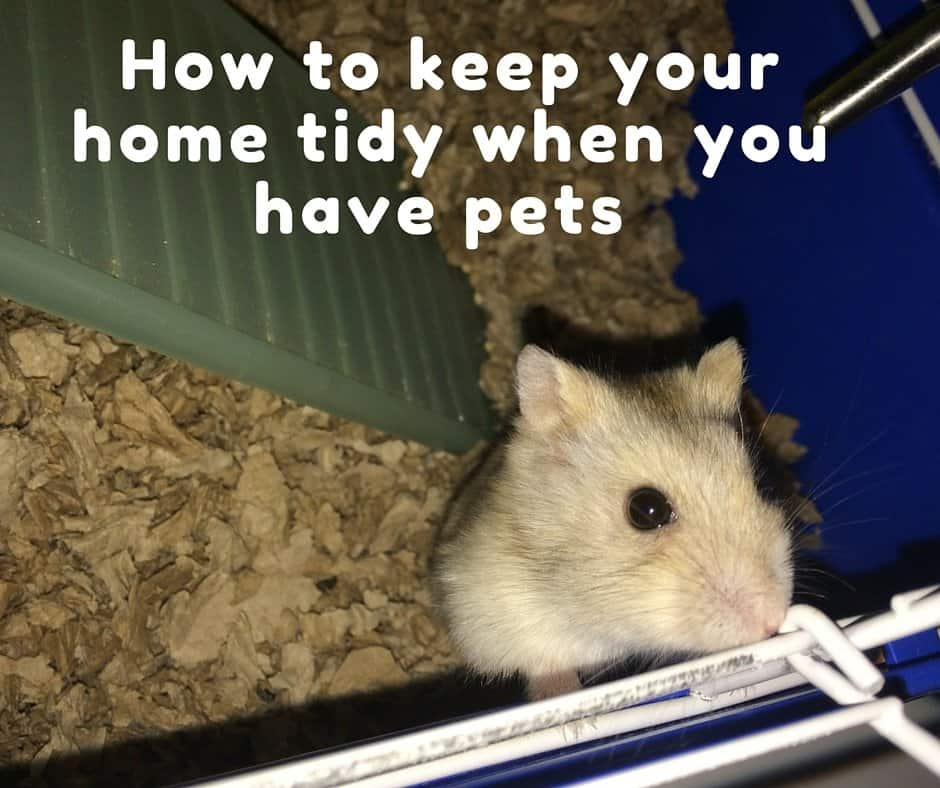 How to keep a tidy home with pets