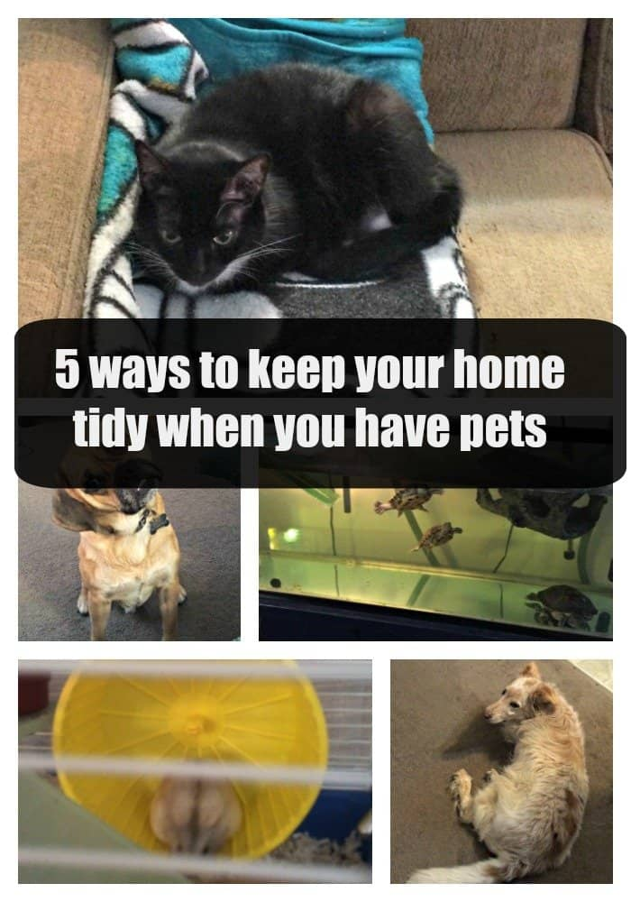 5 ways to keep yor home tidy when you have pets