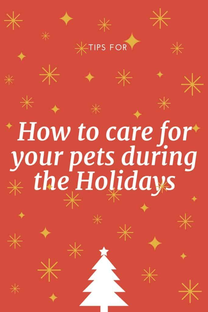 How to care for your pets during the Holidays