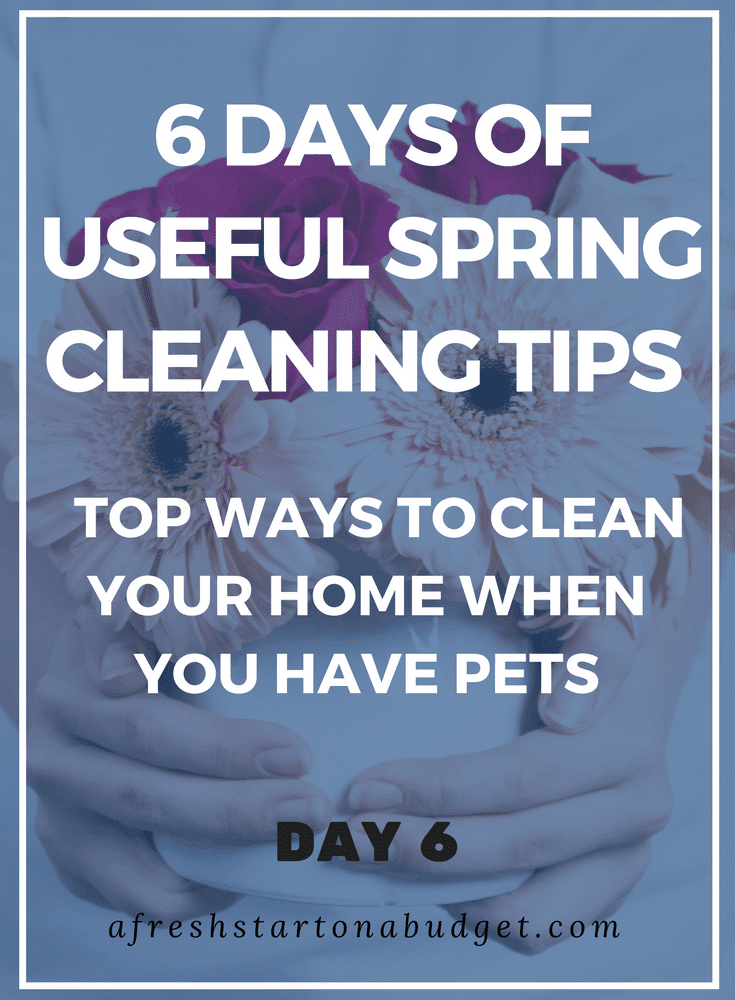 Spring Cleaning Tips_ Top ways to clean your home when you have pets